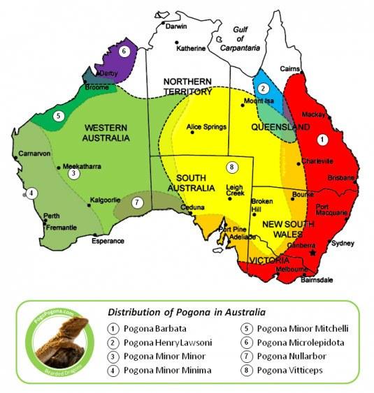 Bearded dragon distribution in Australia