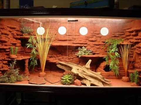 Furnished Bearded Dragon tank