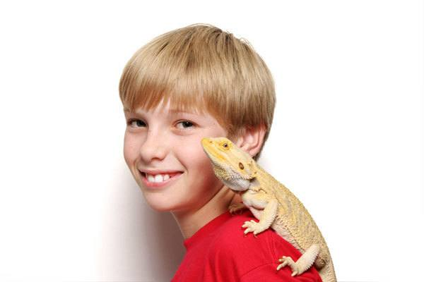 Kid Playing With a Bearded Dragon