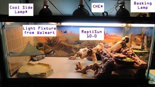 Proper Bearded Dragon Lighting Setup