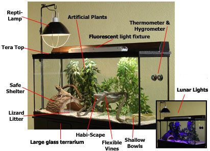 Proper Habitat Setup for Bearded Dragons