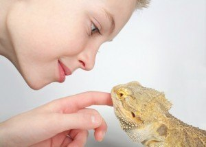 Ultimate Bearded Dragon Care Guide