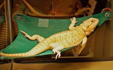 How To Easily Create The Best Habitat For Your Bearded Dragon