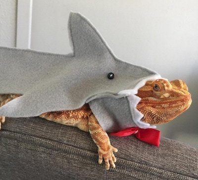 Bearded Dragon Accessories