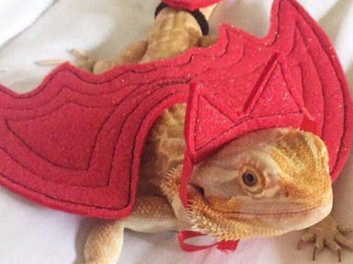 Bearded Dragon Costume