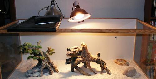 Bearded dragon heat lamp fixture