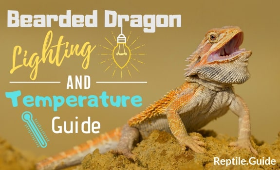 Bearded Dragon Lighting and Temperature Guide