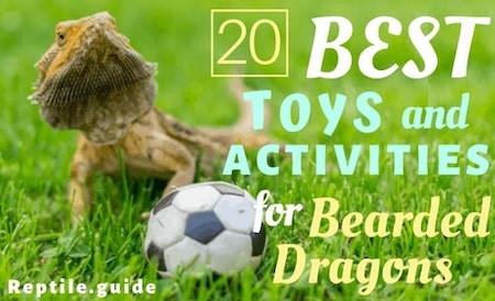 The Best Toys and Activities for a Bearded Dragon