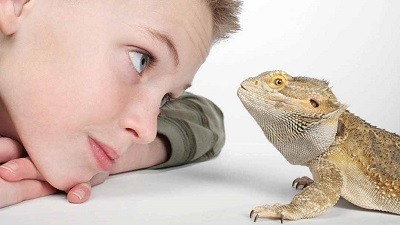 Child and Bearded Dragon Together