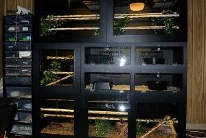 PVC Cages