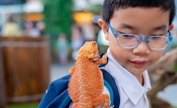 bearded dragon good with kids