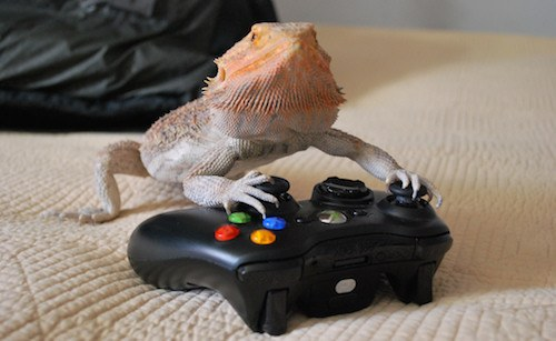 bearded dragon playing video games