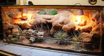 Bearded Dragon Cage Setup and decor ideas 1