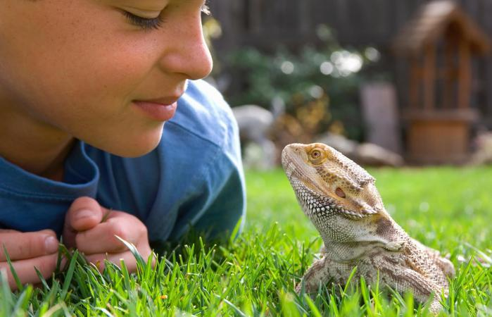 Best Pet Reptiles for Beginners to Own