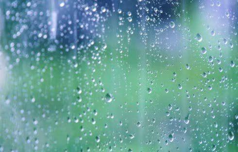 humid vivarium