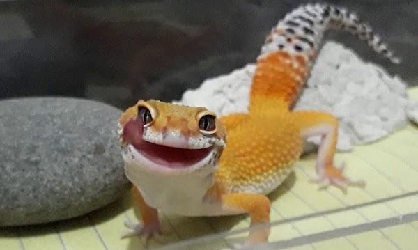 Smiling Leopard Gecko