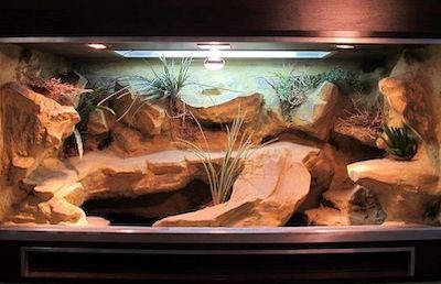 bearded dragon cage setup and decor ideas