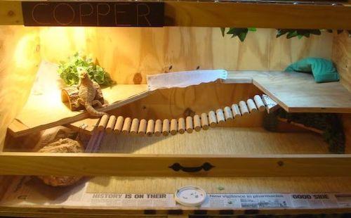 bearded-dragon-cage-setup-and-decor-ideas-11