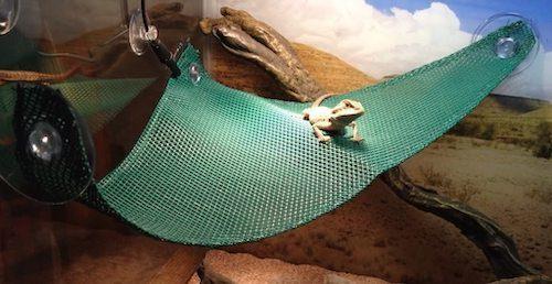 bearded-dragon-cage-setup-and-decor-ideas-13