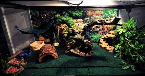 bearded dragon cage setup and decor ideas 3