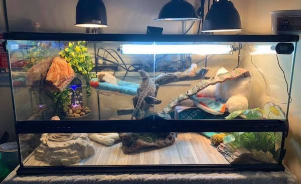 bearded-dragon-cage-setup-and-decor-ideas-5