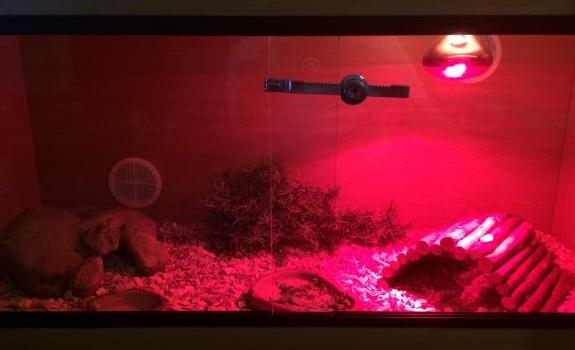 Bearded Dragon Tank with red bulb