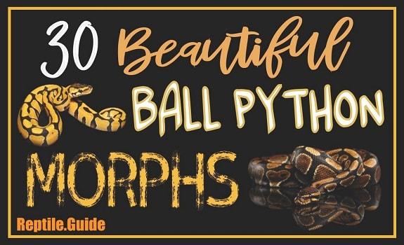 Ball Python Morphs List