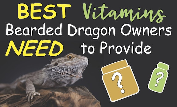 Best vitamins bearded dragon owners need to provide