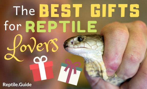 Best Gifts for Reptile Lovers