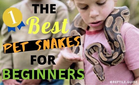 Best Pet Snakes