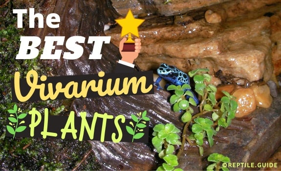Best Vivarium Plants