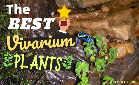Best Vivarium Plants