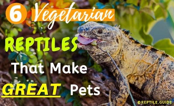 Herbivorous Vegetarian Reptiles