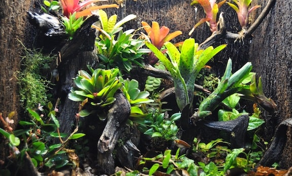 best vivarium plants necessary light levels