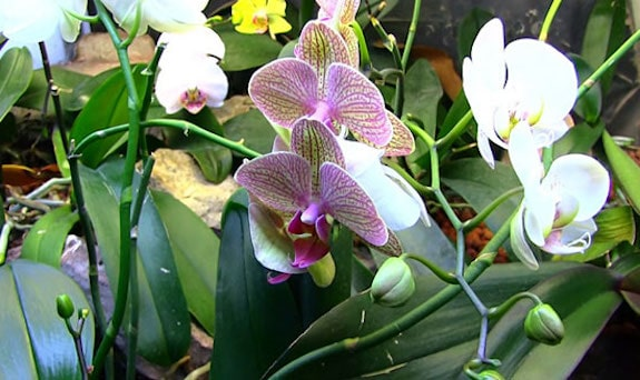 best vivarium plants orchids
