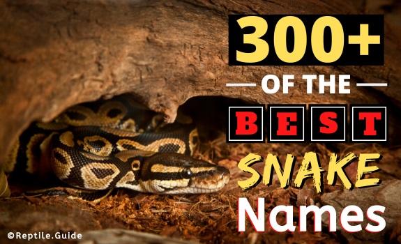 Best Pet Snake Names