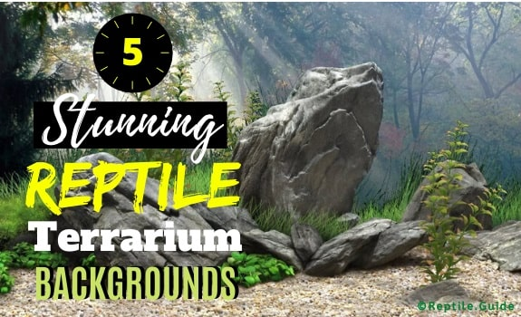 Best Reptile Terrarium Backgrounds