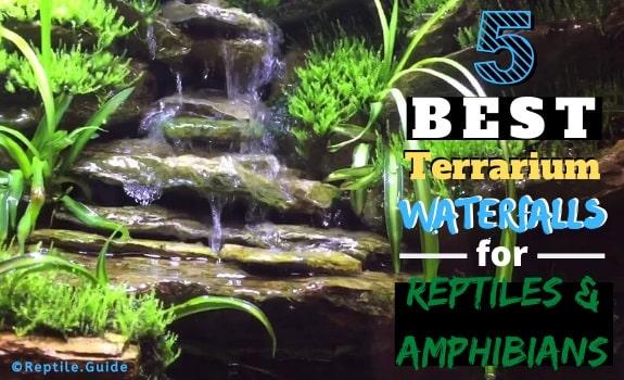 Best Terrarium Waterfalls for Reptiles Amphibians