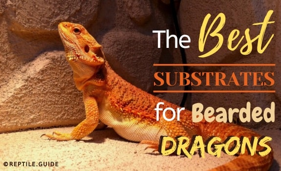 Best substrates bearded dragon