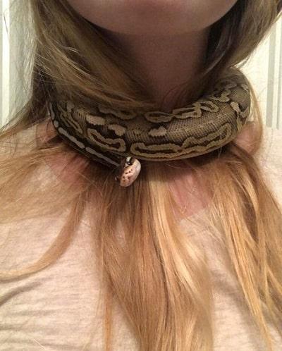Cute Choker Snake