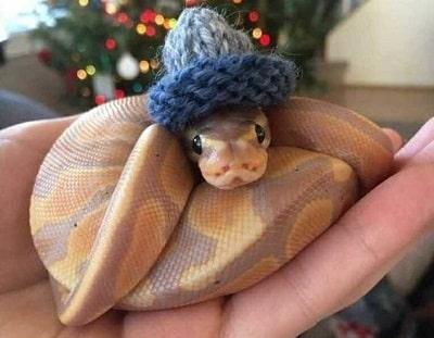 Cute Snake in Knitted Beanie