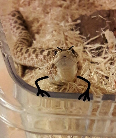 Funny Snake With Drawn on Arms 23