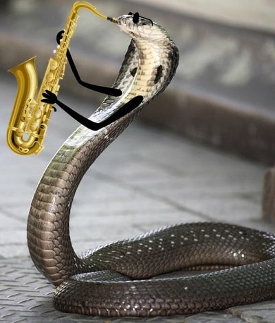 Funny Snake With Saxophone