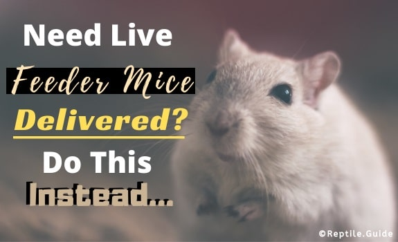 Live Feeder Mice Shipped Delivered Alternatives
