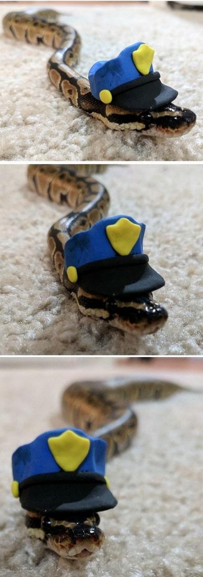 Officer Noodles Cute Snake