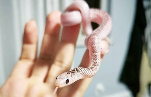 Snake Too Cute Not to Stare
