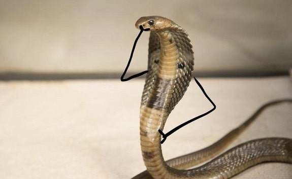 Snake With Drawn on Arms 3
