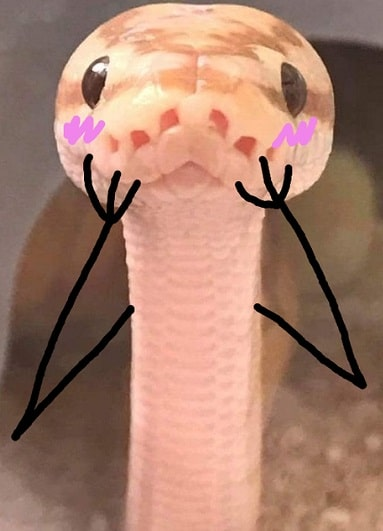 Snake With Drawn on Arms 1