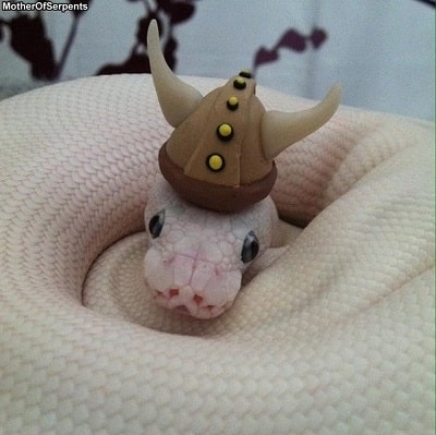 Snake With Viking Hat