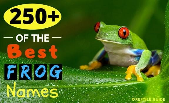 best frog names